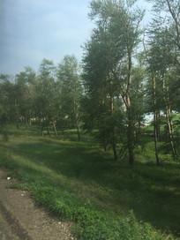 绿树成荫树木图片