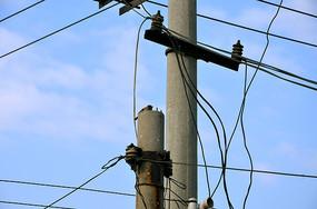 电线杆上的麻雀