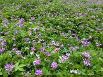 粉色花绿草丛