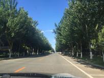 公路两旁的绿树图片