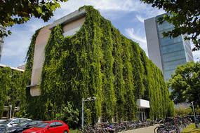 绿树掩映校园楼