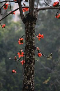 面棉花树木风景图片