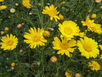 黄花一朵朵