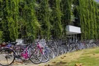 校园苍翠自行车
