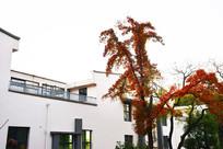 白色建筑和红叶树木摄影