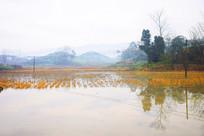 冬日积水稻田秸杆田园风景图