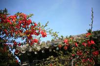 古代园林房屋一角的花
