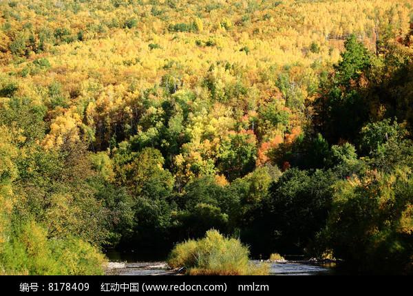 大兴安岭林区森林秋色图片
