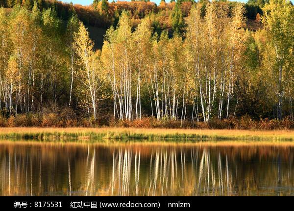 大兴安岭秋季河流图片