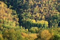秋季林海风景