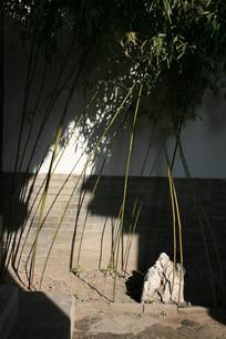 园林一角的竹子