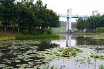 植物园的荷花池