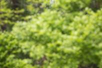 自然的绿色树叶背景