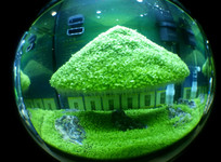 鱼缸的小房子