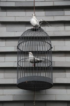 灰色鸟笼和鸽子标本