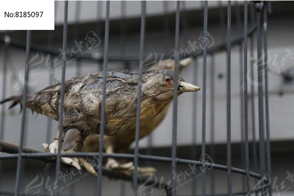 笼中的小鸟标本高清图片下载 编号8185097 红动网