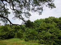 乡村里的绿色森林