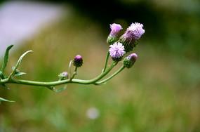 一株紫色野花