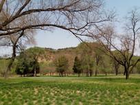 大树旁边的树林