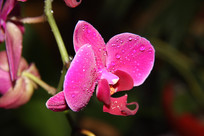 花姿如蝴蝶飞舞