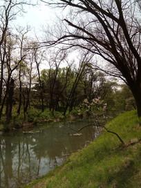 绿色的湖面图片