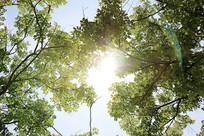 夏天阳光下的树影