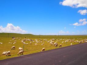 成群结队的羊群