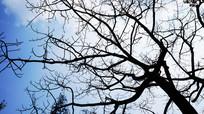 黑色树枝树干