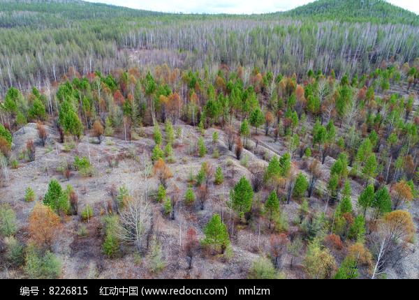 大兴安岭金矿植被恢复生态景观 航拍 图片
