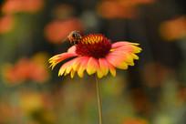 花儿与蜜蜂