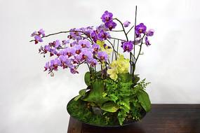 紫蝴蝶兰插花