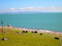 一望无际的青海湖