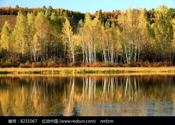 大兴安岭森林河之秋 图片