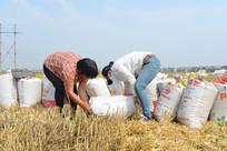 丰收麦田的农民劳动
