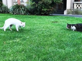 黑白两只猫