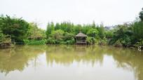 池塘边的风景