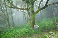 雾气未散的树林