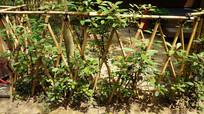 菜地的竹子围栏