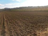 广阔的农田图片