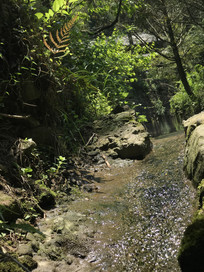 绿色山间小溪