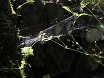 山间蜘蛛网