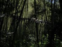 树林松树树叶