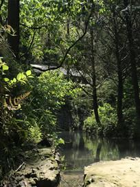 树林小溪房屋