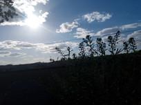小草头顶上的天空图片