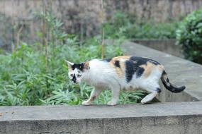 行走的花猫