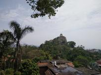 亚热带森林风光