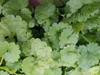 绿色叶子背景素材