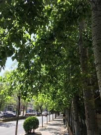 绿荫下的人行道