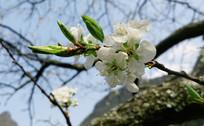 雪白的小花朵