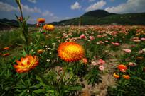 姿态万千的七彩菊